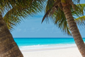 palm_trees_and_beach_204382
